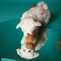 Moon Ball Dog Treat Toy 2