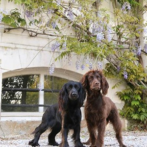 <strong>Le Chateau de la Motte, France</strong> A romantic break to a French 15th-century Château boasting stunning views of the luscious formal gardens. Perfect for couples and their pooch looking to explore Normandy.