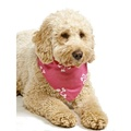 Pink Pirate Dog Bandana