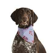 Pet Pooch Boutique - Anchors Away Dog Bandana