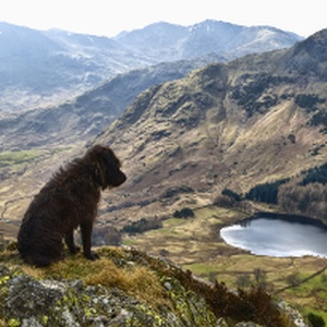 Need some holiday inspiration? Top 5 Dog-friendly Destinations of 2017