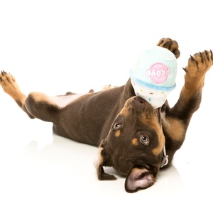 Froyo Frozen Yoghurt Dog Toy