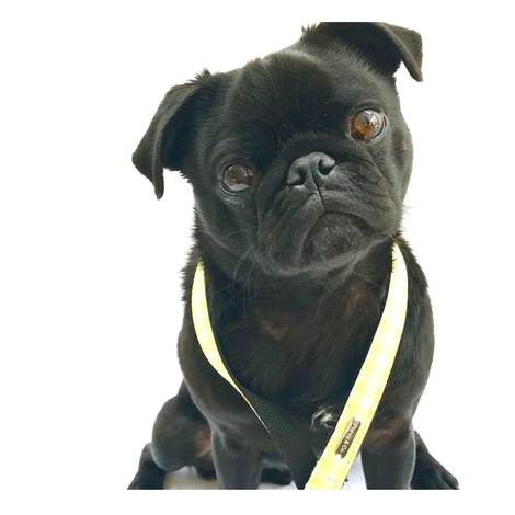 Dog Lead - Hampstead 5