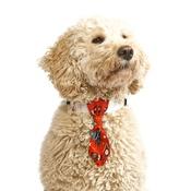Pet Pooch Boutique - Christmas Cheer Dog Tie