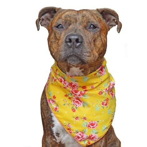 Yellow Vintage Dog Bandana