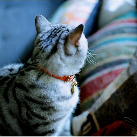 Leather Orange Cat Collar 3