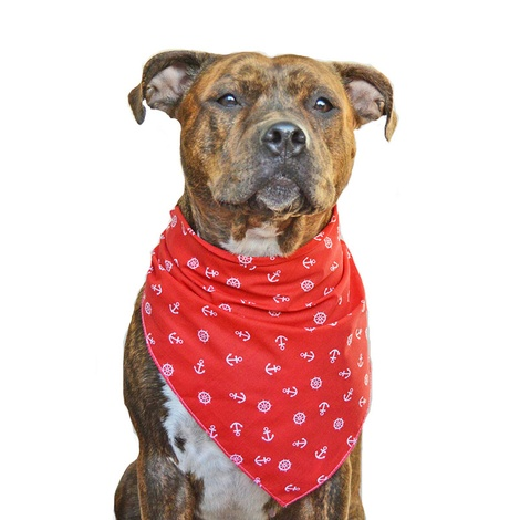 Red Anchors Dog Bandana 2