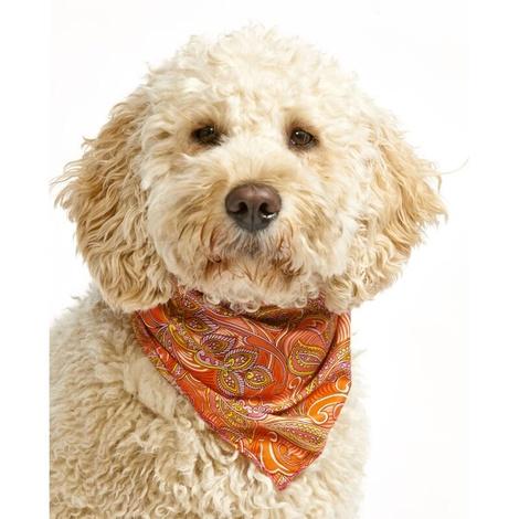 Paisley Cowboy Dog Bandana