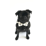 Percy & Co - Collar and Bow Tie - Mayfair