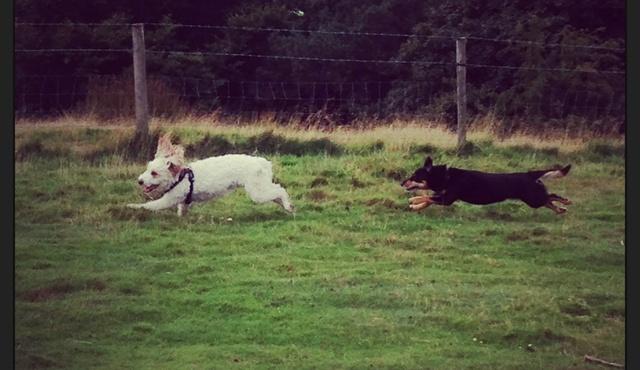 Rosie's Pet Friends 2