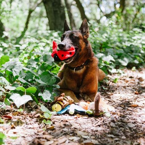 Lola the Ladybird Plush Dog Toy 4