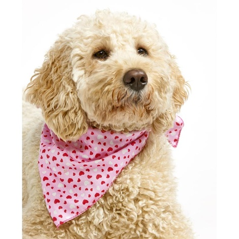 Valentines Love Dog Bandana