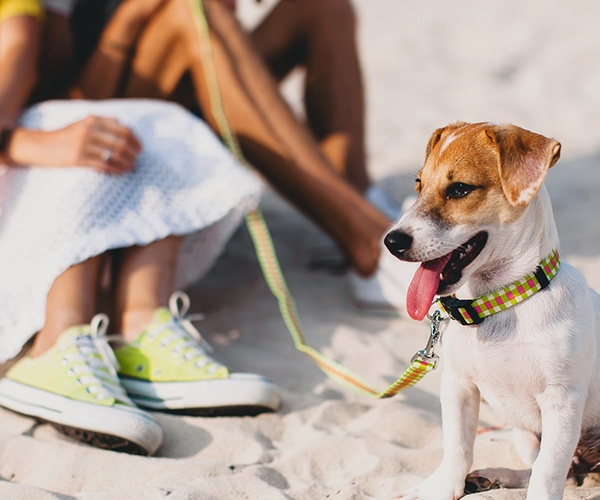 Dog-Friendly Beach Breaks
