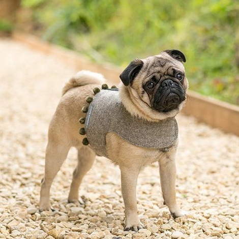 Grey Tweed Dog Harness with Pom Poms 2