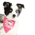 Been There Chewed That Dog Bandana – Hot Pink