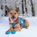 Set of 4 ThermoPaws Dog Boots 2