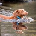 Comfort Padded Dog Collar – Blue 3