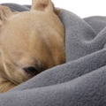 Double Fleece Dog Blanket - Smoke Grey 2