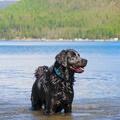 Headwater Dog Collar – Blue Spring 4
