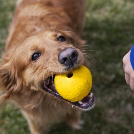 Huckama Dog Toy - Dandelion Yellow 2