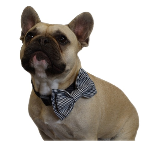 Dogtooth Dog Bow Tie