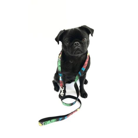 Dog Lead - Jesmond 4