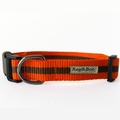 Orange Dog Collar 2