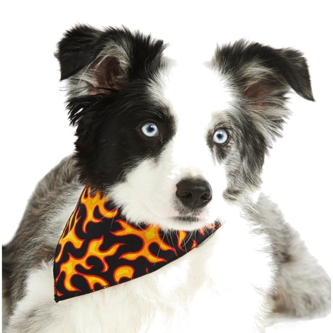 Flamin' Rocker Dog Bandana