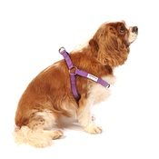 Doodlebone - Bold Dog Harness – Purple