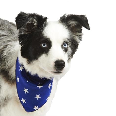 Blue Star Dog Bandana  2