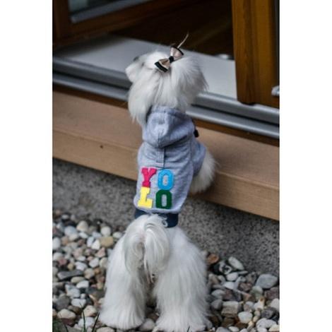 Grey YOLO Dog Hoodie 4