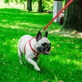Active Dog Harness - Red 2
