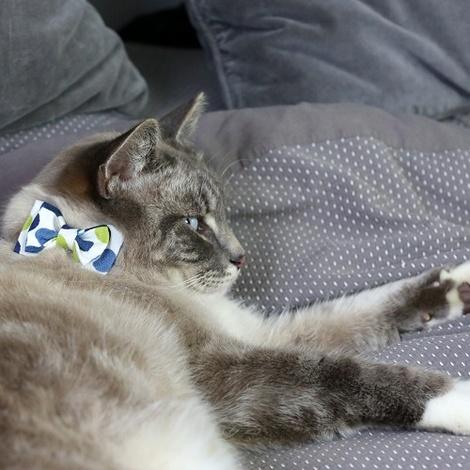 Cat Collar Bow Accessory - Multi Spot 2