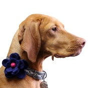 Love from Lola - Bloom Dog Collar Flower Accessory - Navy & Fuchsia