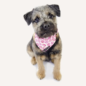 We love Ditsy Pet's fabulous range of matching dog accessories!