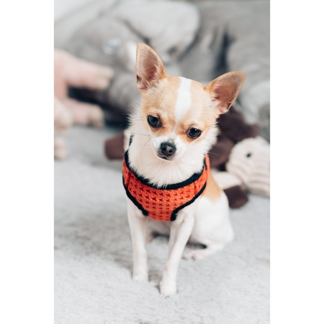 Soho Dog Harness - Orange 4