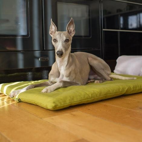 Plain Dog Roll Bed - Olive