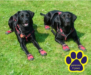 Pensions 4 paws