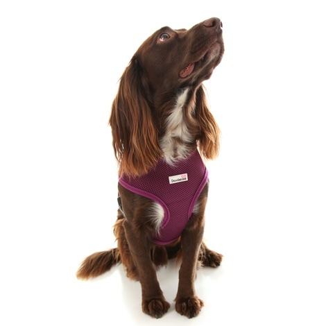 Airmesh Dog Harness – Purple 4