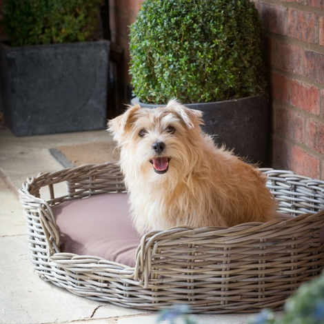 Rattan Kubu Dog Basket - Oval 3
