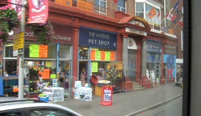 Avenue Pet Shop