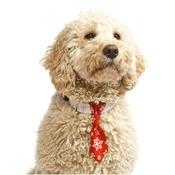 Pet Pooch Boutique - Snowflake Dog Tie – Red