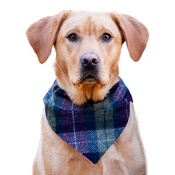 Cari & Co. - Pet & Owner Bandana/Scarf Set Earth Check Harris Tweed