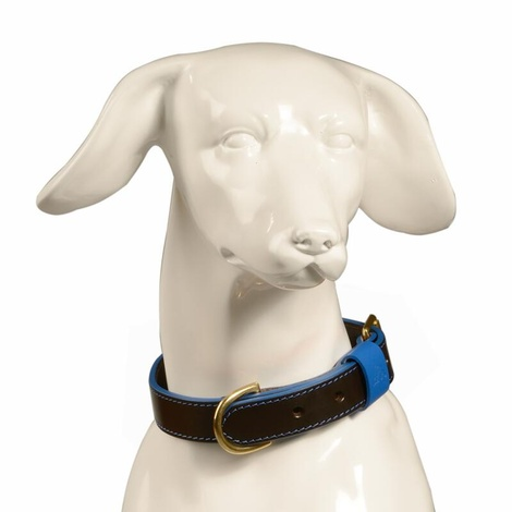 Pimlico Leather Dog Collar – Black & Blue 2