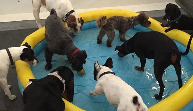 reservoir dogs 6
