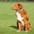 Comfort Padded Dog Collar – Blue 4
