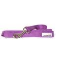 Bold Dog Lead – Purple