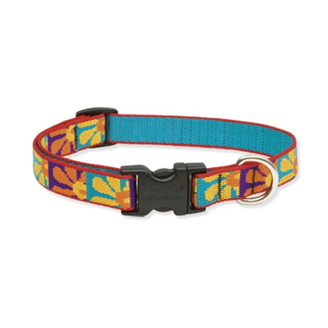 Crazy Daisy Lupine Dog Collar