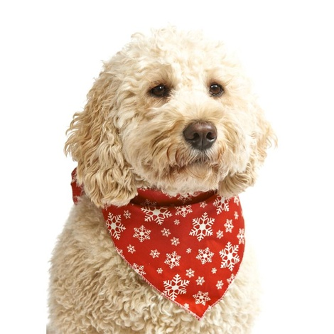 Mini Snowflake Dog Bandana – Red
