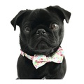 Collar and Bow Tie - Clifton